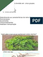 Biologia PPT - Reino PLANTAE II