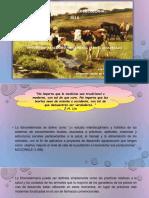 Diplomado Agroecologia Trabajo Etnoveterinaria
