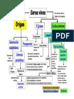 Mapa de Origen y Evolucion
