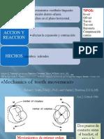 Biomecanicadoblecesytorque 140202230723 Phpapp02 Ppt Albert