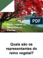 Biologia PPT - Reino Vegetal