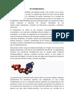 metabolismo.docx