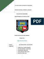 INDUCCIÓN FLORAL EN PIÑA_FruticulturaGeneral_2019Verano.docx