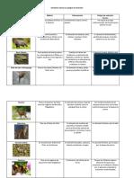Animales nativos en peligro de extinción.docx