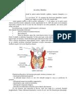 Glandele endocrine.docx