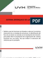 SISTEMA JERARQUICO DE LURIA.pptx