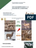 camelidos y cambio climatico.pdf