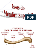 Ac. osseo do membro superior.ppt