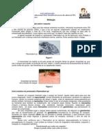 Biologia - CASD - Malária