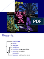 Origem  Evolutiva  Monocotiledoneas