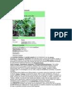 Bryophyta sensu lato.docx