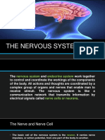 The Nervous System Ppt (1)
