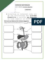 TRABAJO 5° básico los órganos CIENCIAS NATURALES.docx