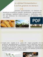 1.6 Calidad Fitosanitaria e Inocuidad en Los Granos en Mexico
