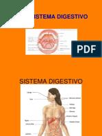 Sistema Digestivo Aula