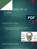 Anatomia de La Cara 2