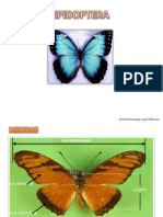 lepidoptera_II.pptx