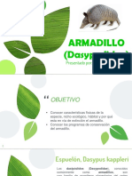 Expo Armadillo
