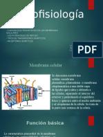 Exposicion Biofisca Mod