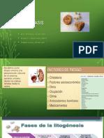 Completo Urolitiasis