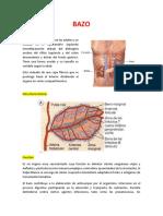 BAZO. Inmunologia.docx