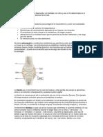 Definiciones de Educacion fisica.docx