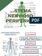 SISTEMA NERVIOSO PERIFÉRICO.pptx