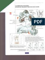 Frederic Delavier Guide de Musculation