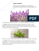 5 Plantas Aliadas Para Repeler Mosquitos