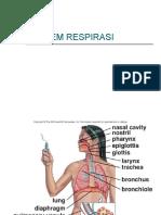 System Respirasi