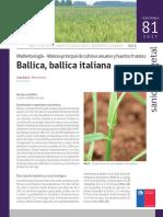 Ficha 81 Ballica, Ballica Italiana