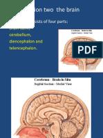 brain stem(1).ppt
