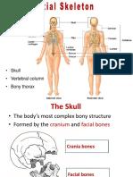 Bones of skull-trunk-ruan-2015.ppt