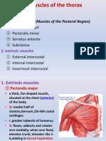 Muscles of  upper lims-trunk -ruan-2015.ppt