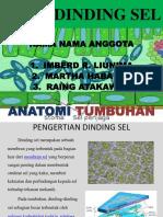 Dinding Sel Anatomi Tumbuhan