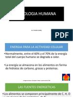 FISIOLOGIA HUMANA CLASE 2.pdf