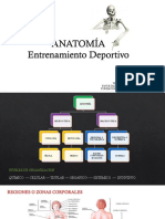 ANATOMÍA  POSICIONES ANATOMICAS