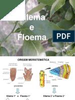 Aula Teórica_6. XILEMA e FLOEMA -Atual - Rosa