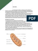 5 MITOCONDRIA Y ENERGIA.docx