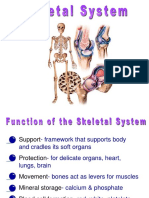 Powerpoint on Skeletal System