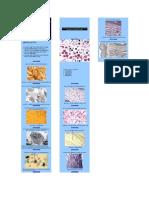 Biologia - Prova Prática - Histologia II