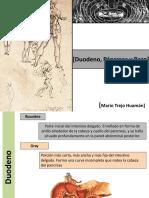 duodeno_pancreas_bazo (1).pdf