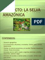 Proyecto Amazonia