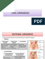VIAS URINARIAS 2.pptx