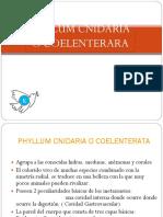 phylumcoelenteradosocnidarios-110409161330-phpapp02