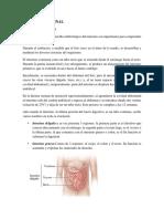 ATRESIA INTESTINAL.docx