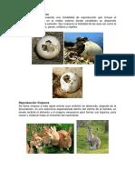 Reproducción Ovíparos.docx