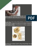 Todo sobre los dientes de tu gato.pdf