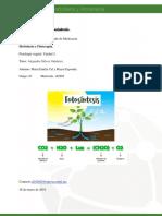 MCalymayor_MapaMental_Fotosintesis.docx
