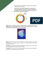 ciclo celular taller.docx